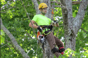 tree services san nantonio - tree removal
